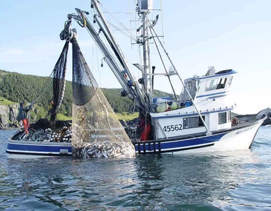 commercial-fishing-branding 3